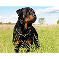 YKCKSD Jigsaw Puzzles For Adults 1000 Piece Rottweiler Dog Wooden Assembling Decoration For The Home Toy Game Gift Educational Toy For Kids And Adults