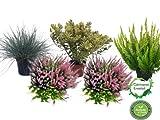 Herbstbalkonset Calluna vulgaris, Gräser, Veronica