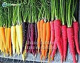 Grandi manzo Heirloom 'Rainbow' Giallo Bianco Viola Arancione Rosso carota misto di verdure Semi, Professional Service Pack, 100 semi / Batterie
