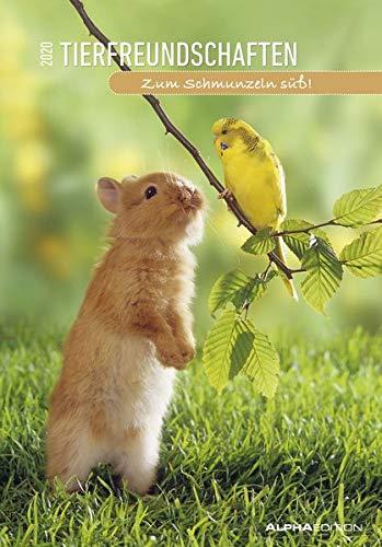 Tierfreundschaften 2020 - Animal Friendships - Bildkalender (24 x 34) - Tierkalender - mit lustigen Sprüchen - Wandkalender