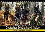 Deutscher Schäferhund-Welpe - aus der Ostdeutschen Arbeitslinie (Tischkalender 2020 DIN A5 quer): Dieser tierische Kalender begleitet einen 8 Wochen ... (Monatskalender, 14 Seiten ) (CALVENDO Tiere) -