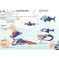 Pianeta-terra-Tavole-infografiche-per-scoprire-il-nostro-mondo
