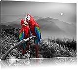 süße Papageien auf Ast schwarz/weiß Format: 60x40 auf Leinwand, XXL riesige Bilder fertig gerahmt mit Keilrahmen, Kunstdruck auf Wandbild mit Rahmen, günstiger als Gemälde oder Ölbild, kein Poster oder Plakat