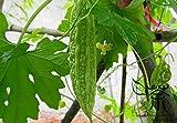 Semillas cultiva ampliamente melón amargo bálsamo pera 20pcs Semillas, Semillas de Calabaza vegetales verdes amargos, Salud y Bienestar Momordica charantia