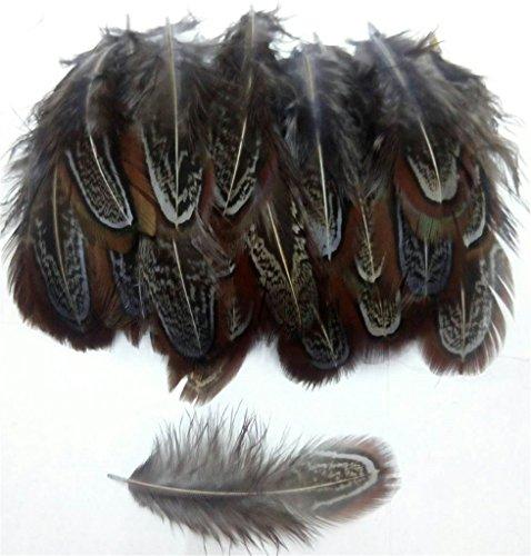 ERGEOB Natur Dekoration Hahnfeder fasan Feder 50 stück, 4-7cm läng, Ideal für Kostüme, Hüte, basteln, Zuhause Dekor, DIY grau