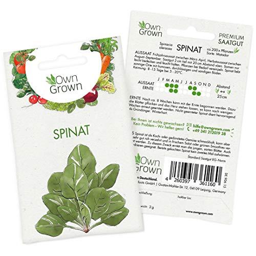 OwnGrown Premium Spinat Samen (Spinacia oleracea), Spinatsamen zum Anbauen, Saatgut für rund 200 Spinat Pflanzen Sorte Spinat Matador