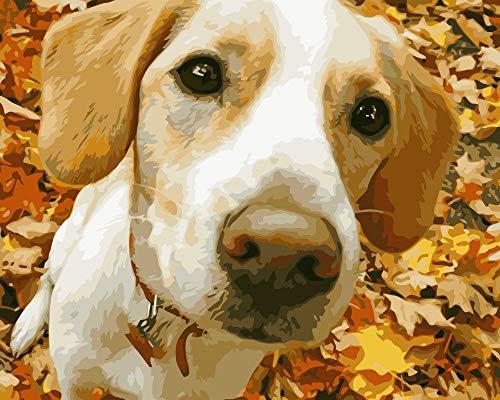 PAINTINGLEE DIY Digitale Leinwand Ölgemälde Geschenk für Erwachsene Kinder Malen nach Zahlen Kits Hauptdekorationen-Niedlichen Hund 16 * 20 Zoll (kein Rahmen) 6160 Kit