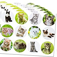 meekoo 240 Pieces 12 Cute Styles Cat Photo Stickers 1.5 Inch Realistic Kitten Stickers for Class Reward, Party Favors, Game Prizes, Novelty Toys, Creative Scrapbooks, Personalized Arts and Crafts