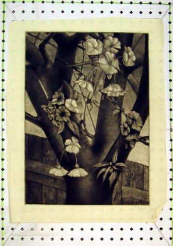 piante-di-fioritura-della-natura-degli-alberi-del-paese-antico-della-stampa