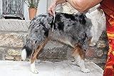 Läufigkeitshose, Läufigkeitshöschen, Größe XS, Hundeschutzhose, Inkontinenzhöschen für Hunde - 4