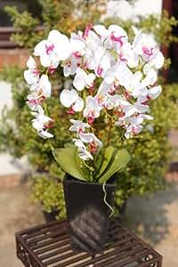 Uk-Gardens Orchidea Bianca e Rosa Artificiale Pianta in un vaso alto di ceramica bianco - Casa di Office o uso interno - Pianta da interni