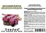Seedeo Gartenmelde rubinrot (Atriplex hortensis var. Rubra) 200 Samen BIO