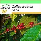SAFLAX - Garden to Go - Pianta di caffè - 8 semi - Coffea arabica nana