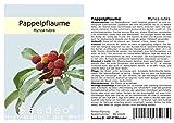 Seedeo® Pappelpflaume (Myrica rubra) 10 Samen