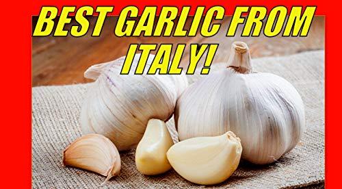 Generic SAMEN: 20 Italien Organic Clove/Seeds DIE Beste FREIE Versand NUR IN DEN USA * -