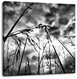 Monocrome, Düsteres Gras vorm Regen, Format: 70x70 auf Leinwand, XXL riesige Bilder fertig gerahmt mit Keilrahmen, Kunstdruck auf Wandbild mit Rahmen, günstiger als Gemälde oder Ölbild, kein Poster oder Plakat