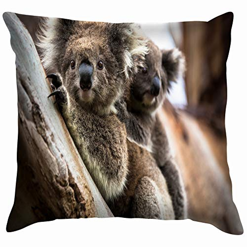 beautiful& Wild Koala Seen Along Way Cape Animals Wildlife Throw Pillow Case Cushion Cover Pillowcase Watercolor for Couch 18X18 Inch (Halloween Shop Melbourne)