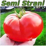 20semillas de la tomate gigante italiana 'Pomodoro gigante italiano' Prod. Italia 2016