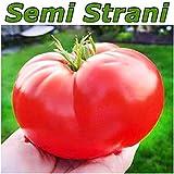 20 Semi POMODORO GIGANTE ITALIANO il più Grande Pomodoro del Mondo + Picolla Guida Coltivazione