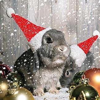 Conejos con gorro de Papá Noel