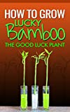 How To Grow Lucky Bamboo: The Goodluck Plant