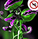 Adolenb Jardin- Raretés Graines carnivores Graines Venus flytrap Dionaea muscipula Flytrap Graines de plantes pour balcon/jardin plantes d'intérieur rustiques vivaces
