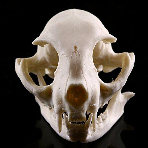 chädel Figur Harz Replik Lehr Skelett Modell für Sammlung Aquarium Dekor (Schädel)