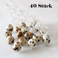 40 Stück Wachteleierschachteln, Eierschachteln für 18 Wachteleier aus OPS