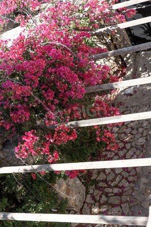 Leinwand-Bild 70 x 110 cm: 'Purple flowers bougainvillea on a wooden pergola, Santorini Island',...