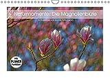 Naturmomente: Die Magnolienblüte (Wandkalender 2019 DIN A4 quer): Die Magnolie - unser schönster Frühlingsbote (Geburtstagskalender, 14 Seiten ) (CALVENDO Natur)