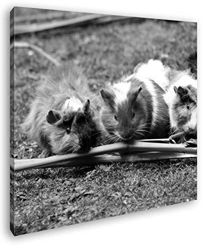 deyoli Niedliche Meerschweinchen beim fressen Format: 60x60 Effekt: Schwarz&Weiß als Leinwandbild,...
