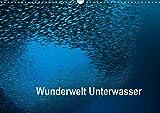 Wunderwelt Unterwasser (Wandkalender 2019 DIN A3 quer): Tauchen in Moaboal/Philippinen (Monatskalender, 14 Seiten ) (CALVENDO Tiere)
