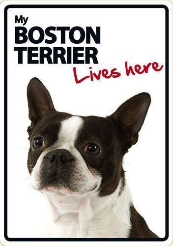 Boston Terrier Lives Here - Flexi Portrait -