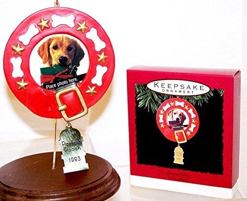 Pet Apparel Paw & Bone Grün Rollkragen Knit Pullover Hund SZ Medium -