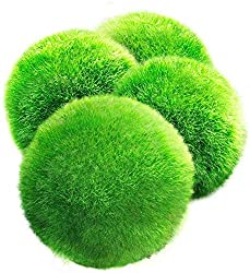 4 LUFFY Giant Marimo Moss Balls, Aesthetically Beautiful & Create Healthy Environment, Low-Maintenance, Suit All aquarium sizes, Shrimps & Snails Love Them