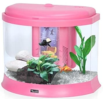 Pink pet fish images galleries with a for Pink fish tank