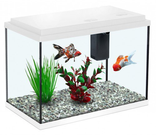all-pond-solutions-aquatlantis-funny-fish-35-aquarium-fish-tank-15-small-large-white