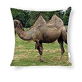 Dartys Pillow Cover Camel Grass Walk Timber Trees Baumwolle und Leinen Pillowcase Klassische Mode Streifen Bunte18x18zoll 45x45cm liebevollen Kissen Decken