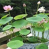 Kicode Flores acuáticas Semillas de plantas Estanque decorado flores Un paquete de 20 Envase mixto Tanque de agua Interior y exterior