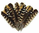 ERGEOB Hähnchen Federn 15-20 cm/ 6-8 Zoll länge hohe Bodenhühnerstall Federn geflügel natürlichen Haarstruktur 50/100/200 stück