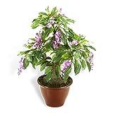 Maximex HC-Handel 936075 Kunst-Bonsai Glyzinie im Keramiktopf 37 cm hoch mit lila Blüten und über 200 feinen Blättern