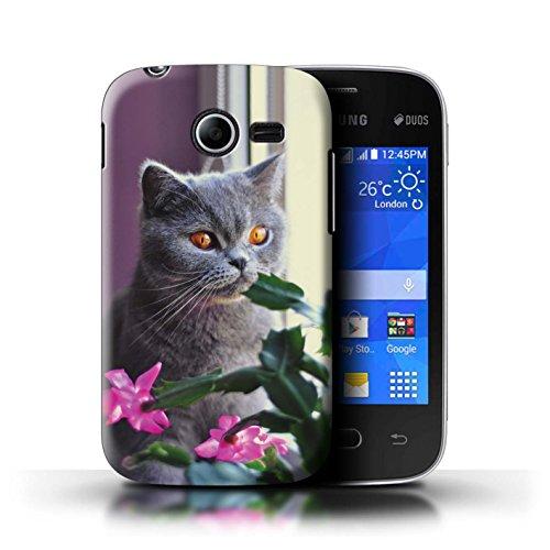 Stuff4® Hülle/Case für Samsung Galaxy Pocket 2 / Britisches Blau/Kurzes Haar Muster Katze/Katzenrassen Kollektion -