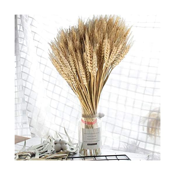 100 piezas de trigo seco para manualidades, flores artificiales de alta simulación de hojas de trigo para decoración de…