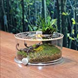 Ruyi&JixiangSerbatoio di pesce piccolo serbatoio tartaruga rettile creativo cilindrico con un balcone contenitore di alimentazione trasparente acrilico breve crawler jar