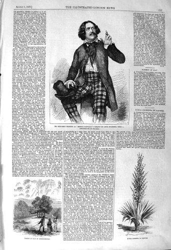 Original old antique victorian print YUCCA 1857 BENJAMINS WEBSTER DENBIGHSHIRE GLORIOSA