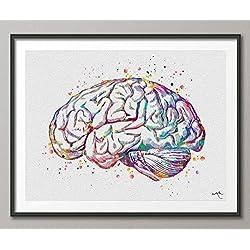 Cerebro en acuarela