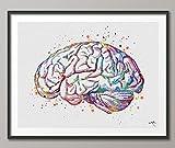 Anatomie du cerveau aquarelle Impression Medical Art Science Art Graduation Cadeau Anatomy Neurology cerveau humain infirmière Science Poster Psychological-972, Moyen, Multicolore, 5.83 x 8.27