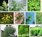 Promozione 2016 New Artemisia annua Semi giardino della pianta dei bonsai Semi-100pcs Varietà interesse Albero semi perenne sempreverde Nove