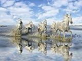 Artland Qualitätsbilder I Poster Kunstdruck Bilder 120 x 90 cm Tiere Haustiere Pferd Foto Blau C2GJ auf Dem Weg