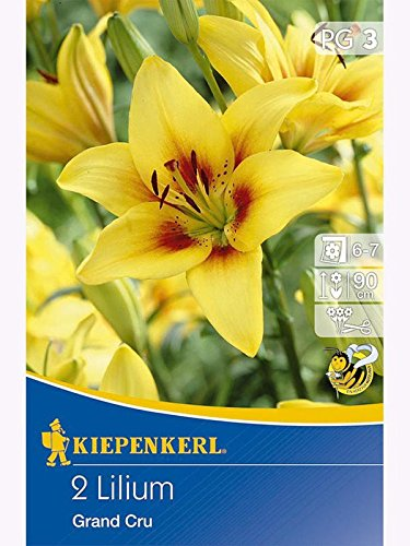 Lilien Lilium Asiatische Hybriden Grand Cru gelb mit braunem Herz